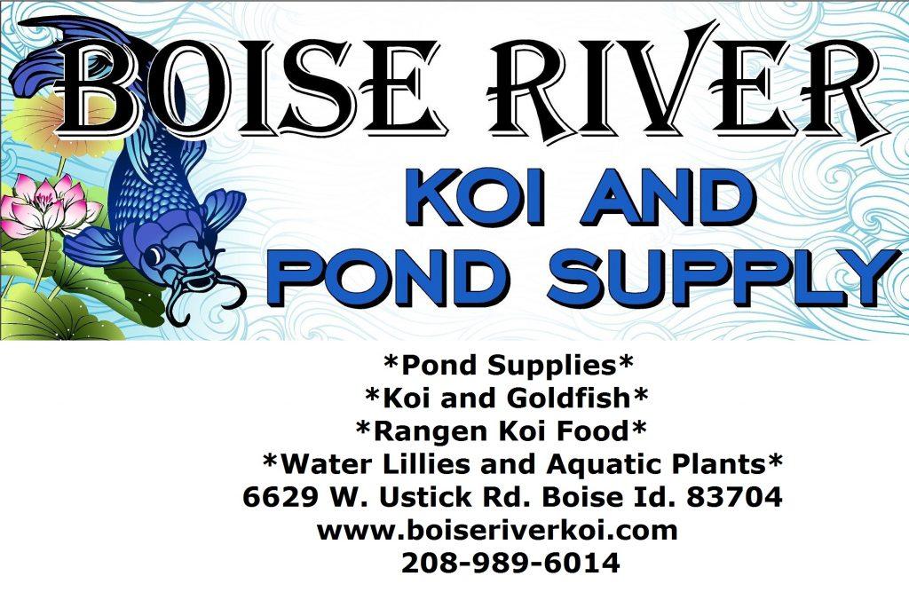 Boise River Koi